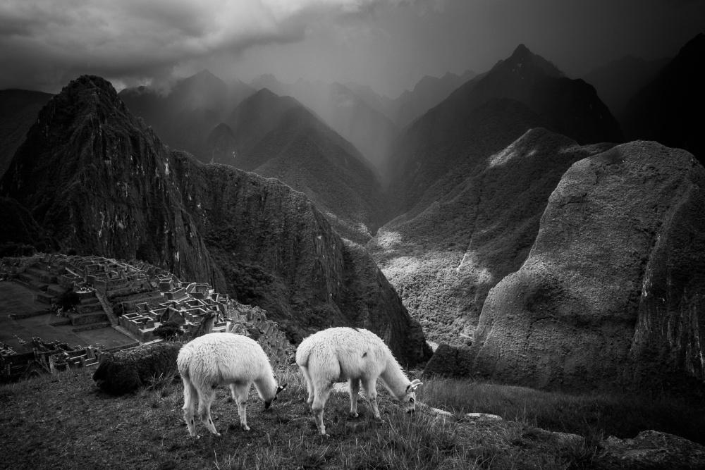 A piece of fine art art photography titled Llamas Grazing at Machu Picchu by Helena Normark