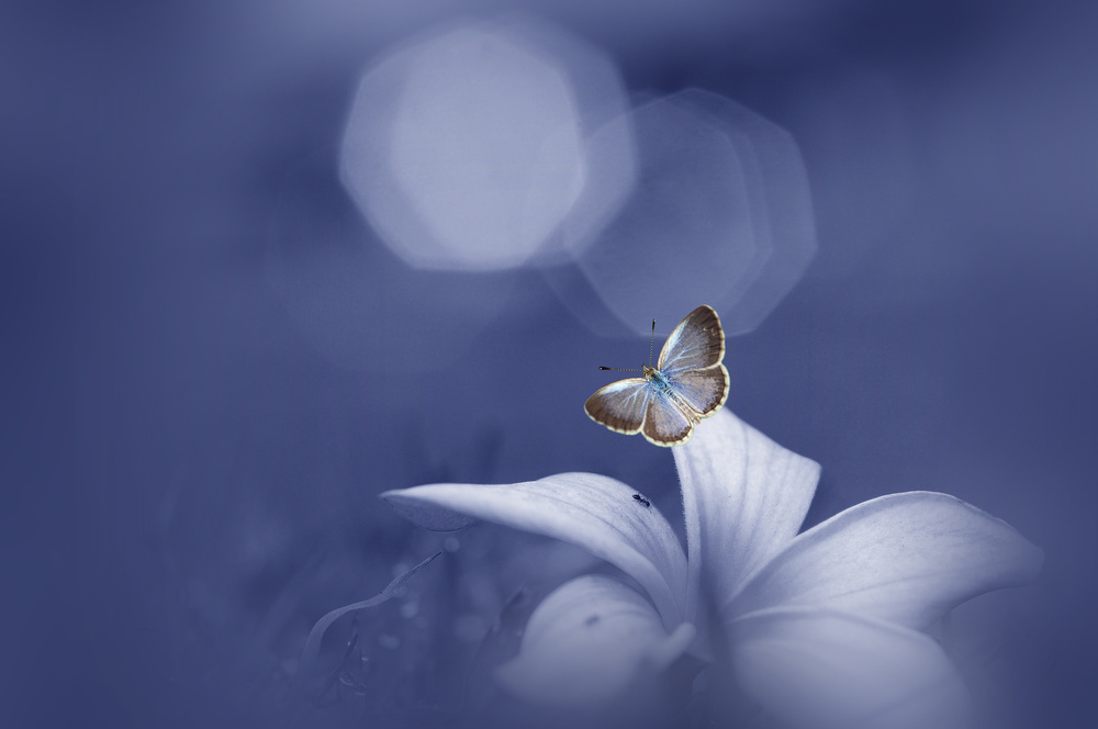 View this piece of fine art photography titled The Butterfly Longs For The Moon by Jacky Parker