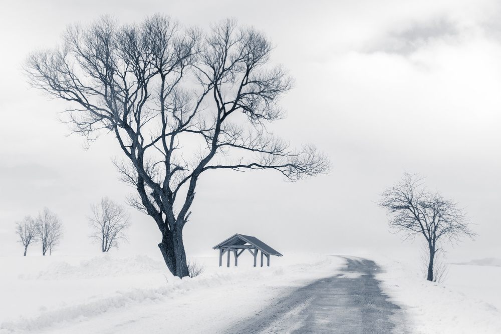 A piece of fine art art photography titled Up the Hill by Rasto Gallo