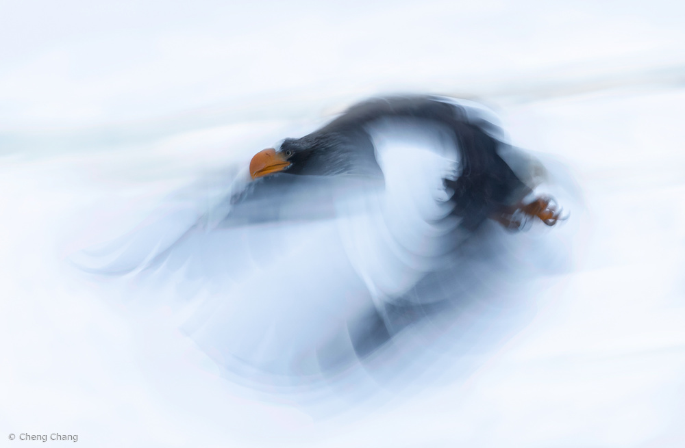 View this piece of fine art photography titled A Mighty bird by Cheng Chang