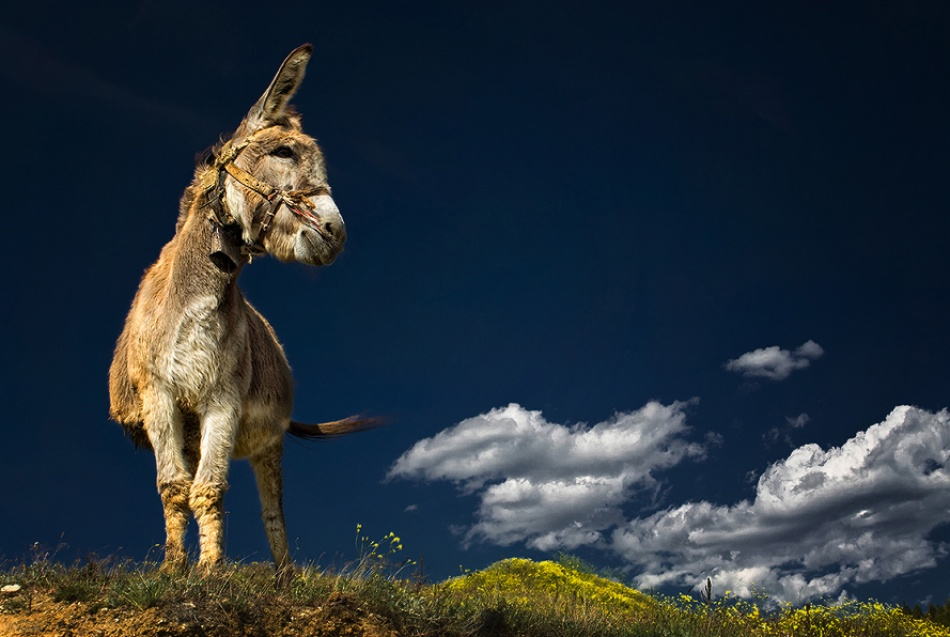 A piece of fine art art photography titled The Donkey by rokoko