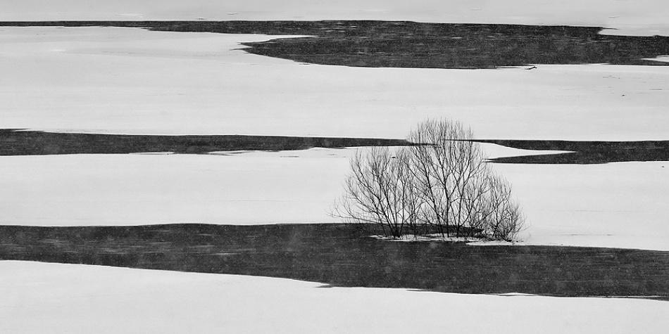 A piece of fine art art photography titled Black On White by Jure Kravanja