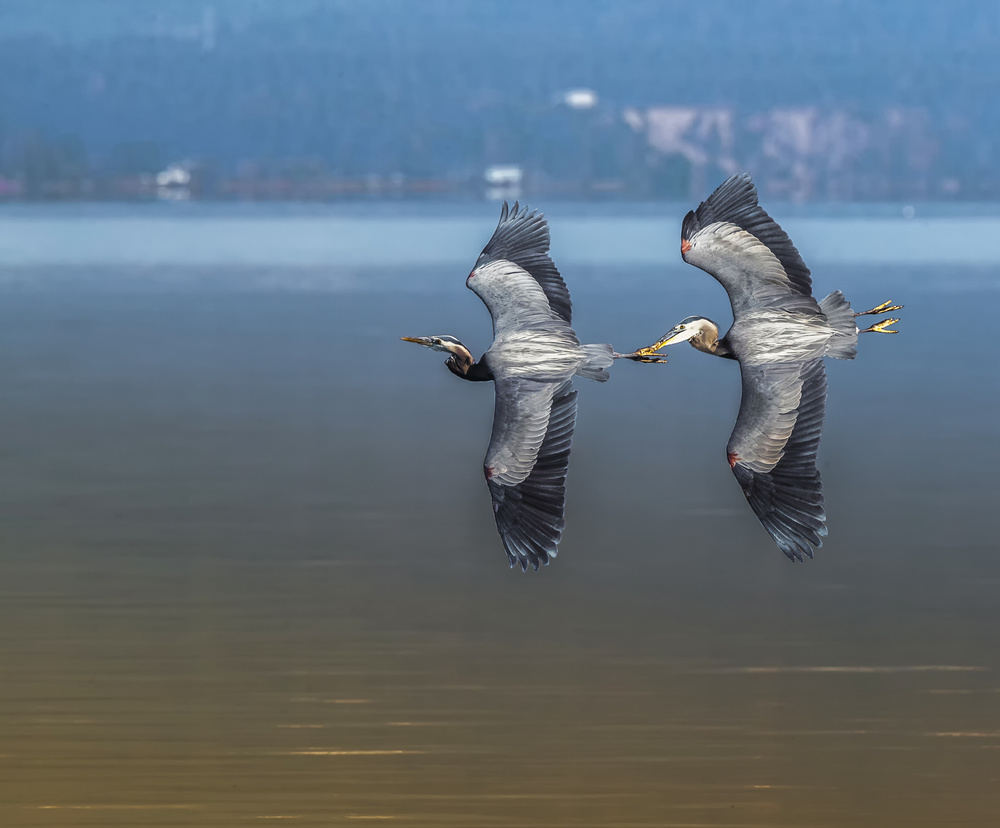 A piece of fine art art photography titled Duet by Judy Tseng
