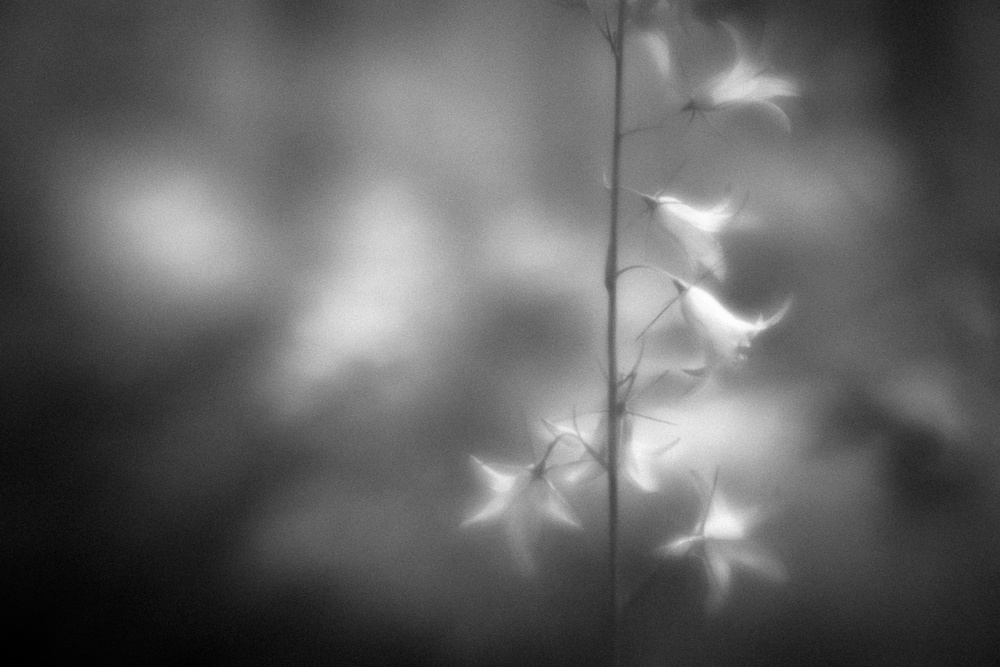A piece of fine art art photography titled A Tender Morning by Anne Rose Pretorius