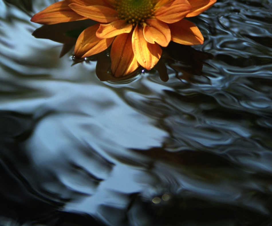 A piece of fine art art photography titled Orange Float by Faye White