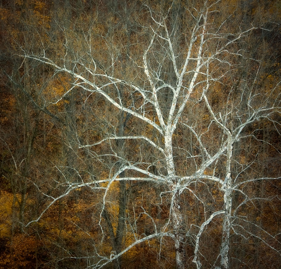 A piece of fine art art photography titled Ode to Autumn by Amy Weiss