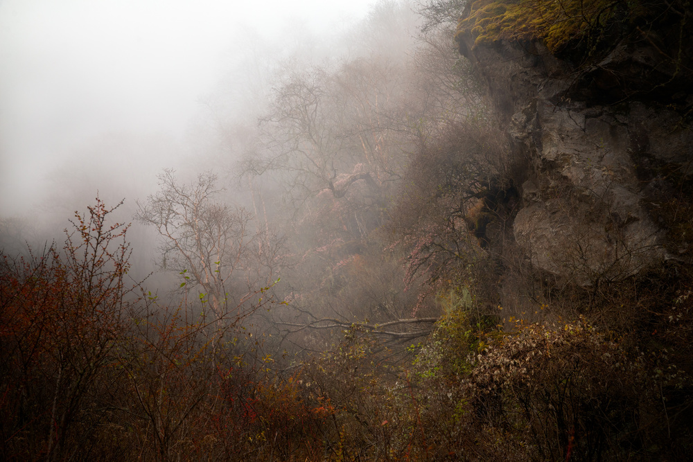 A piece of fine art art photography titled Misty Forest by Alexis