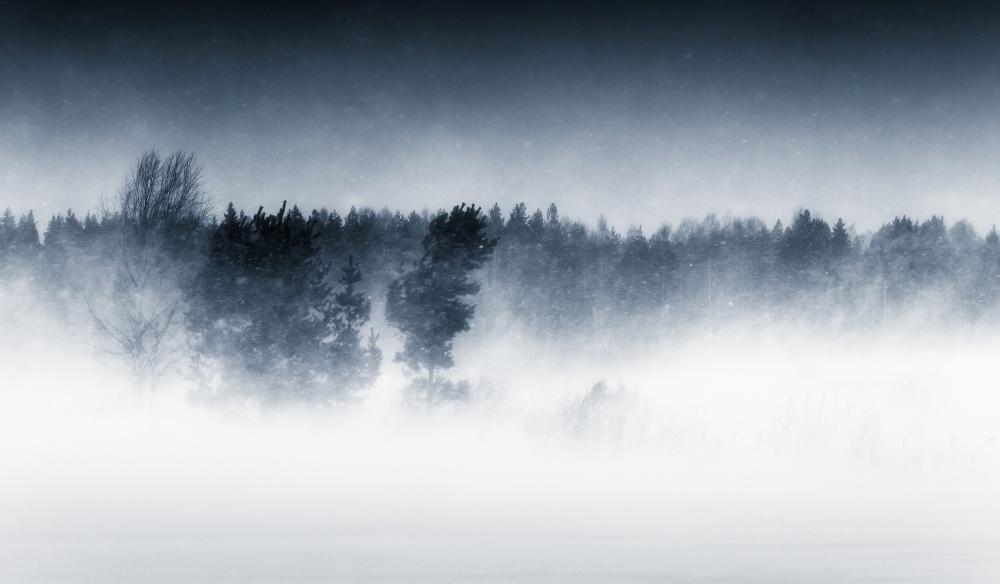 A piece of fine art art photography titled Trees In the Wind by Joni Niemelä