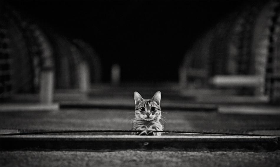 A piece of fine art art photography titled Urban Cat by Bela Benedek