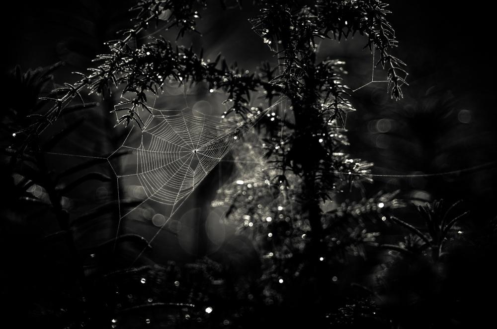 A piece of fine art art photography titled Web by Joni Niemelä