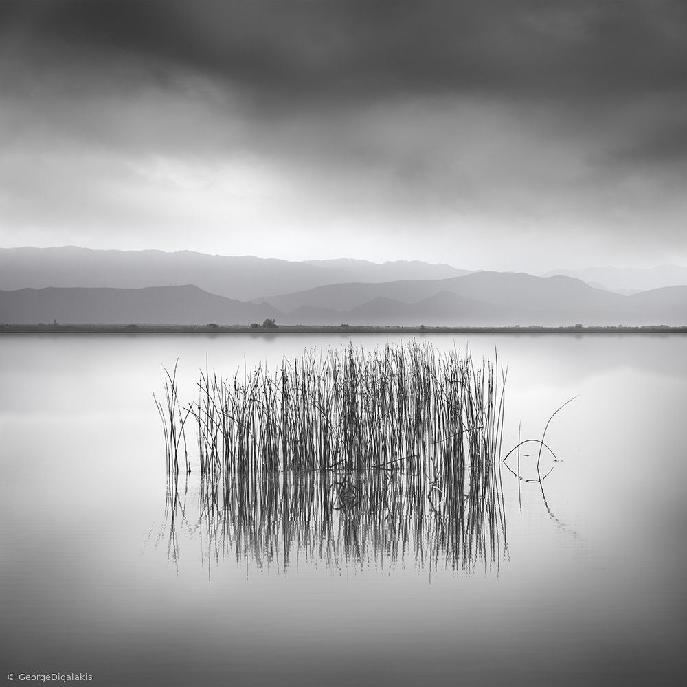 View this piece of fine art photography titled Reeds by George Digalakis