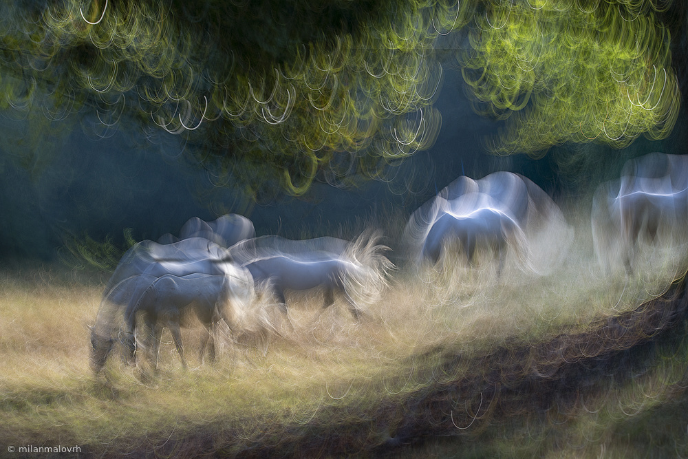 View this piece of fine art photography titled on pasture by milan malovrh