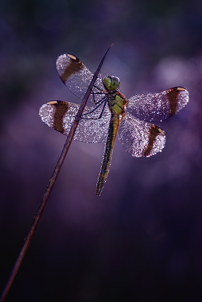 A piece of fine art art photography titled Purple Rain by Peter Reijners