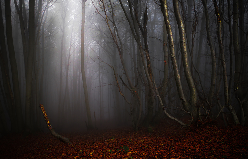 A piece of fine art art photography titled Fog by Alessandro Traverso