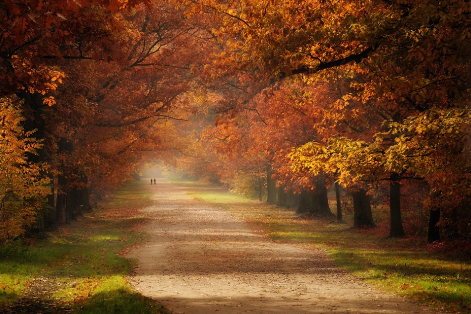 A piece of fine art art photography titled Autumn by Pawel Kucharski
