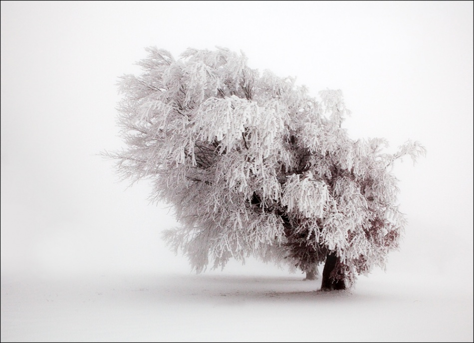A piece of fine art art photography titled Frozen Moment by Ralf Greiner