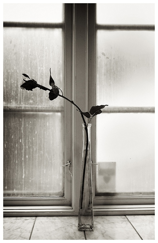 A piece of fine art art photography titled Window and Flower, Copenhagen 2008 by Bjarte