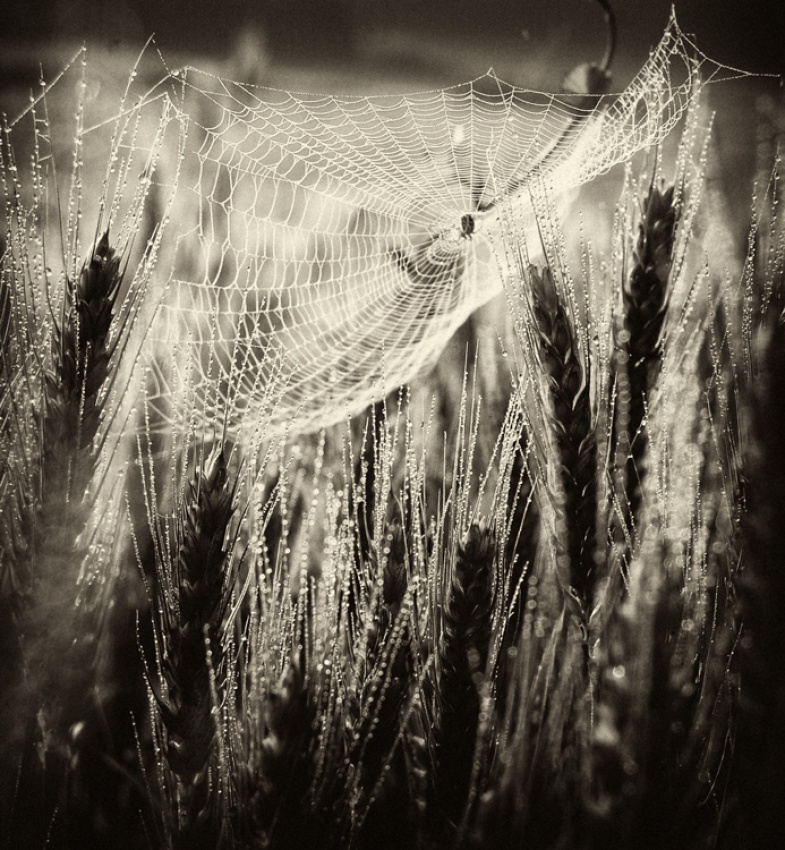 A piece of fine art art photography titled Waiting In the Weeds by Barbara