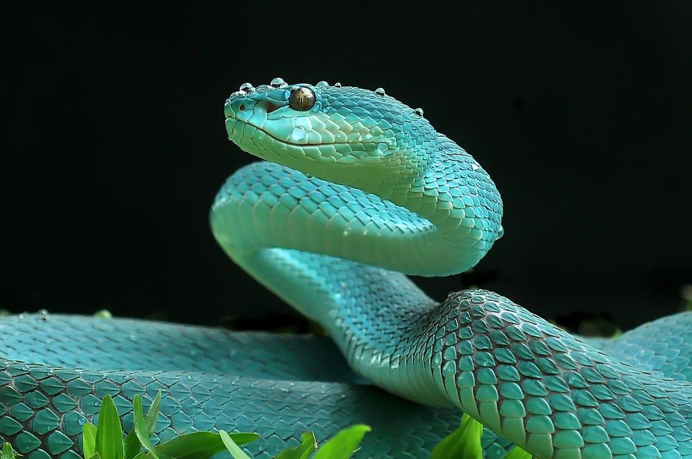 A piece of fine art art photography titled The Viper by yan hidayat