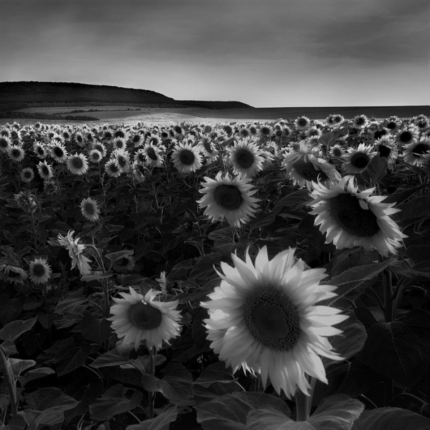 A piece of fine art art photography titled Suns by Adam Holweg