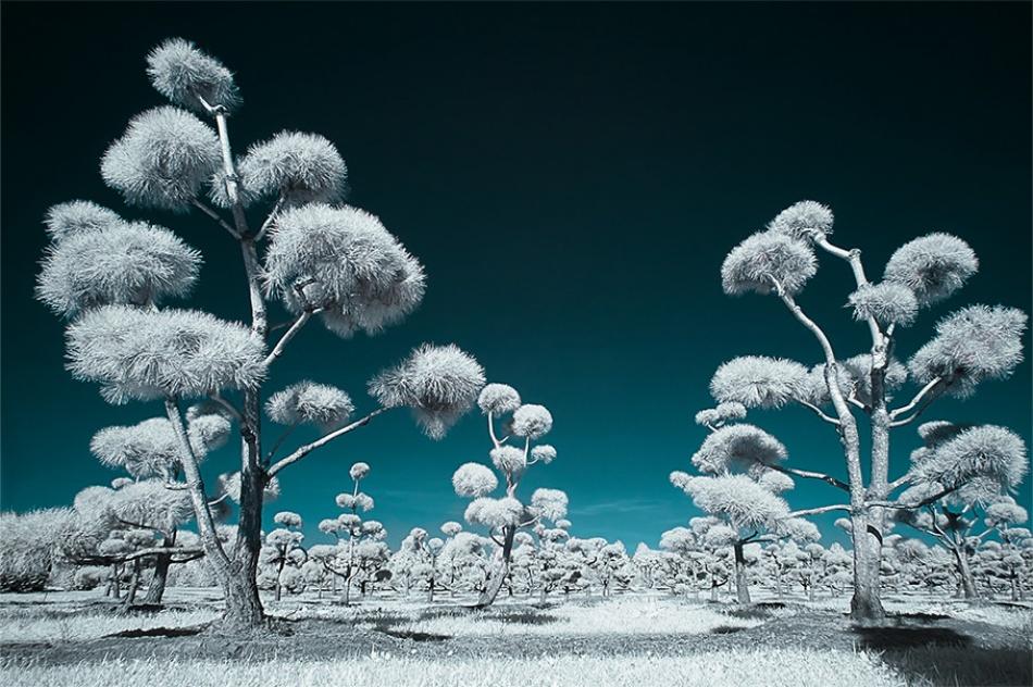 A piece of fine art art photography titled Lapland by Vaans Ruijten