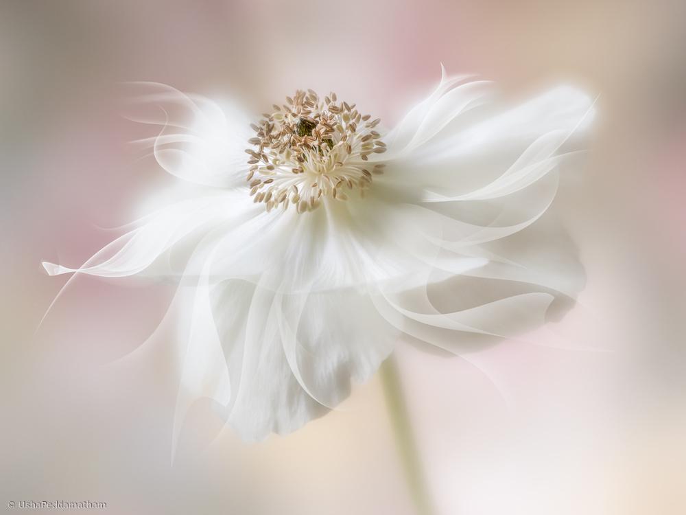 Flower of my dreams