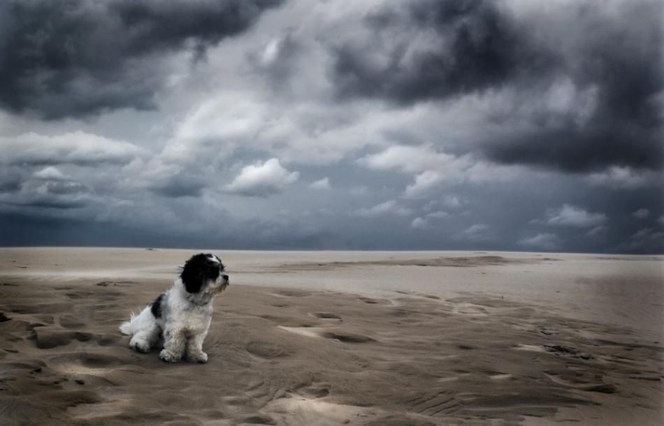 First dog on mars