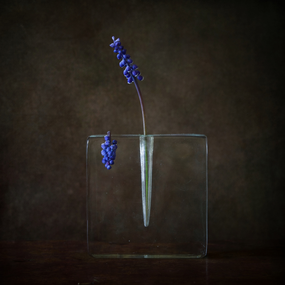 View this piece of fine art photography titled still life with blue flowers by Iwona Nabzdyk