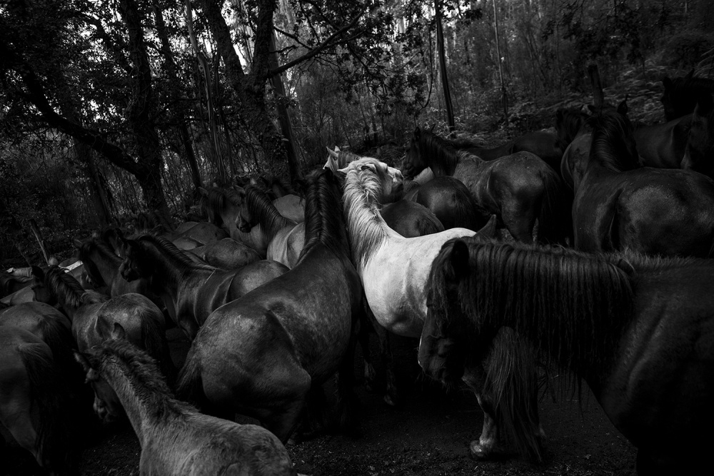 A piece of fine art art photography titled Wild Horses by Daniel Rodrigues