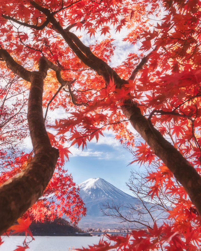 View this piece of fine art photography titled Mt.fuji is in the autumn leaves by Makiko Samejima