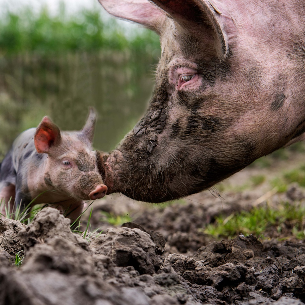 A piece of fine art art photography titled Get Into the Mud, and Get Yourself Dirty by Gert van den Bosch