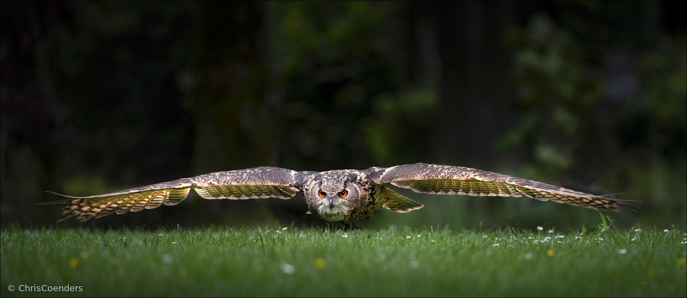 View this piece of fine art photography titled Owl by MIN LI