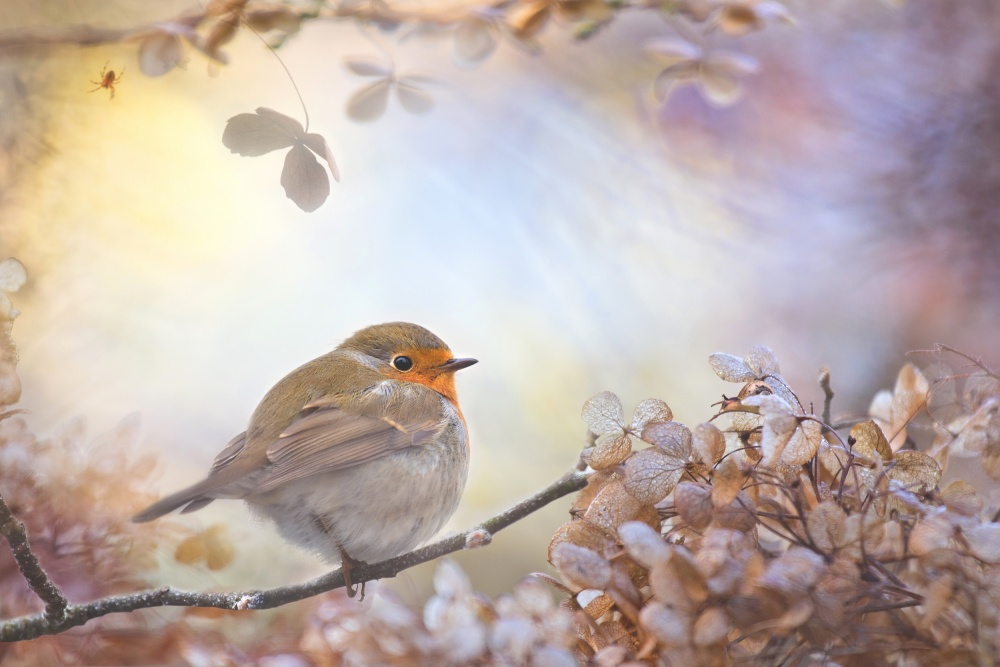 A piece of fine art art photography titled Robin On Dreams by Teuni