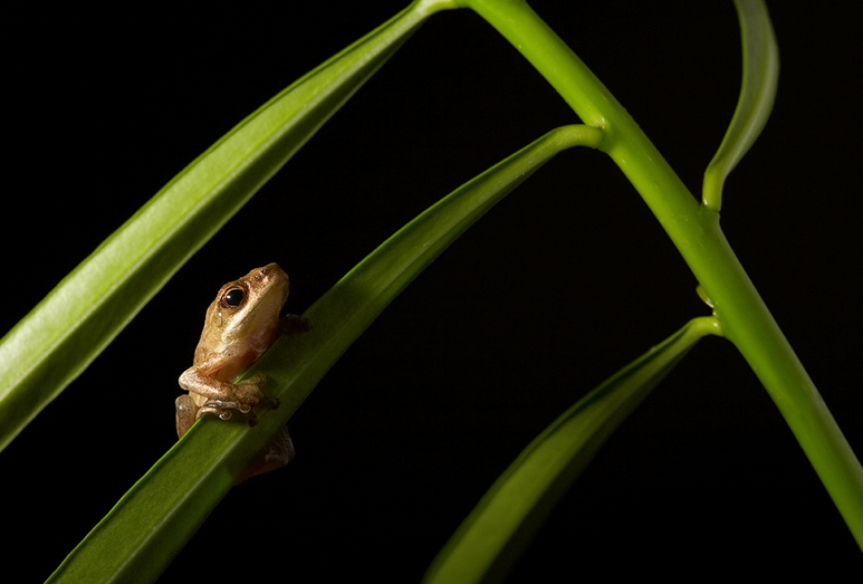 A piece of fine art art photography titled Tree Frog by simondeg