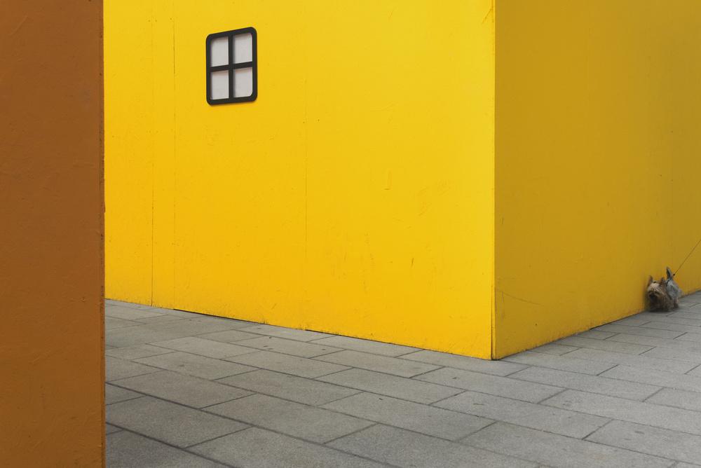 Yellow street dog