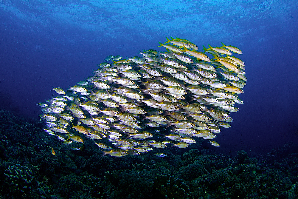A piece of fine art art photography titled School of Fish by Kirti Casie Chetty