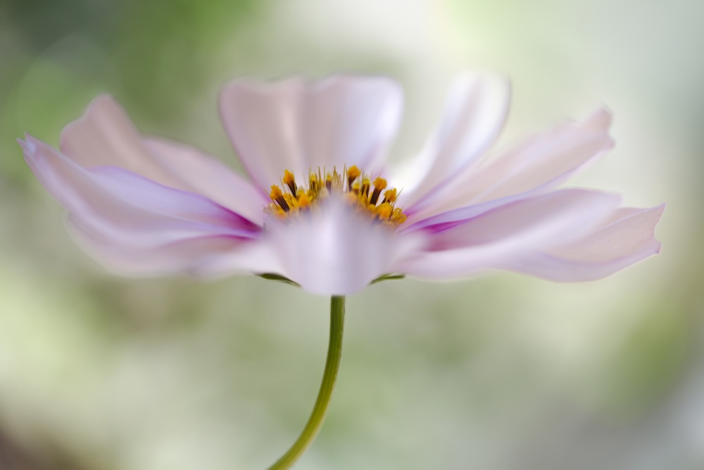 A piece of fine art art photography titled Cosmos Cloud by Mandy Disher