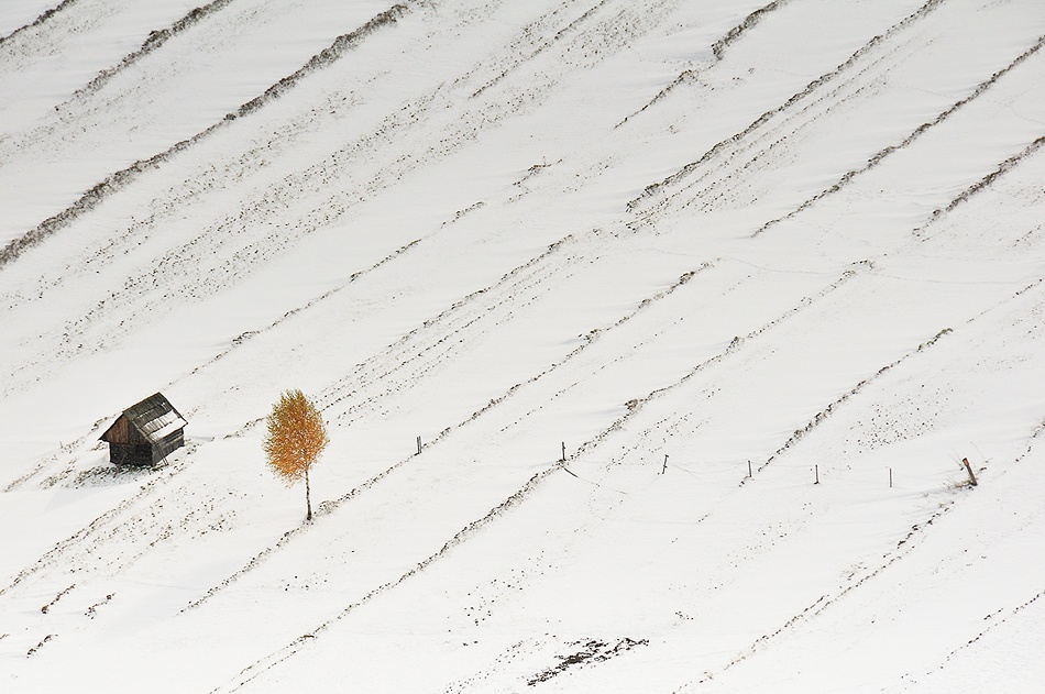 A piece of fine art art photography titled Build a House, Plant a Tree by Stano Strateny
