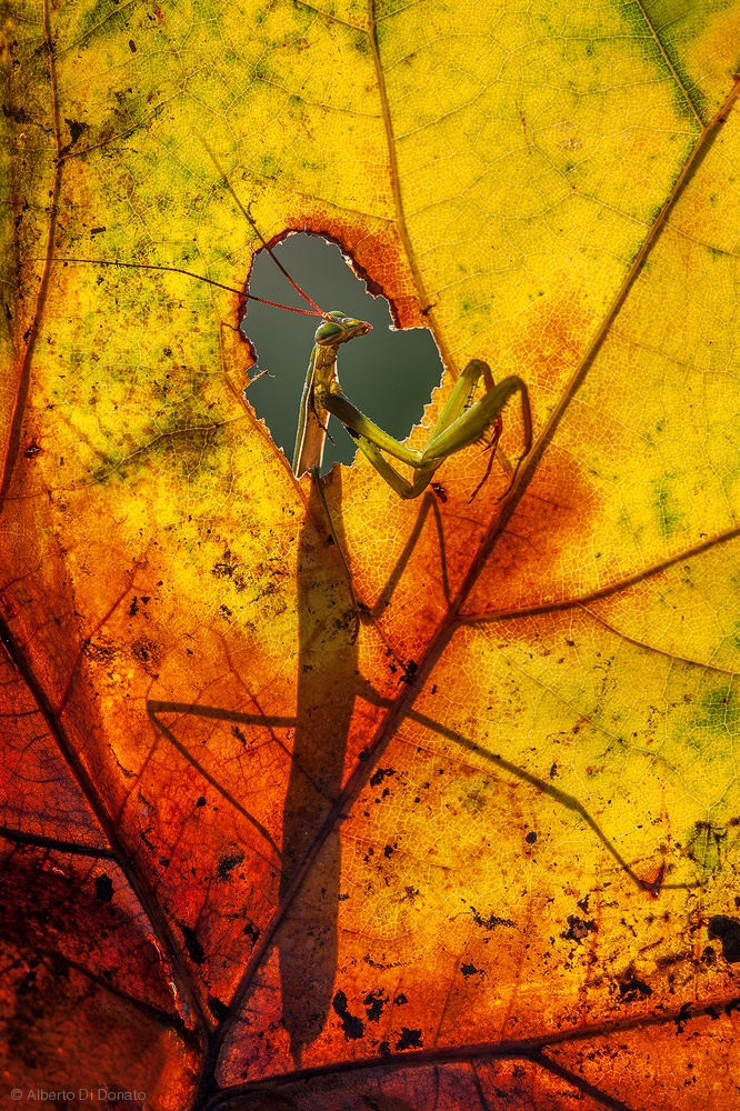 -on window enjoying the autumn-