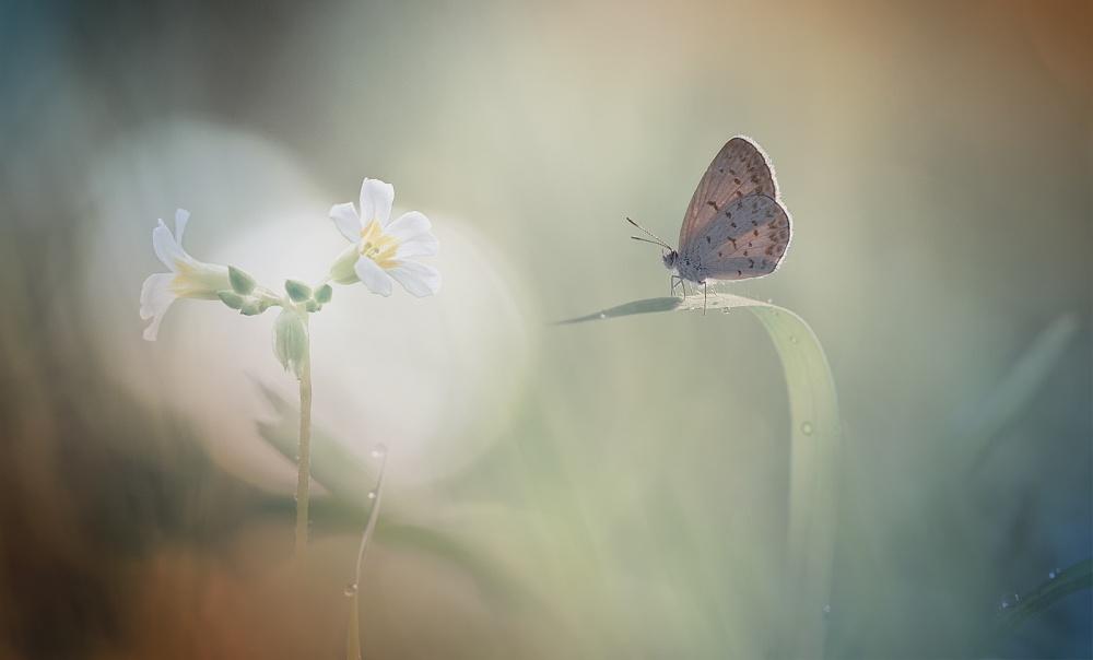 A piece of fine art art photography titled Sunbathing by Heri Wijaya