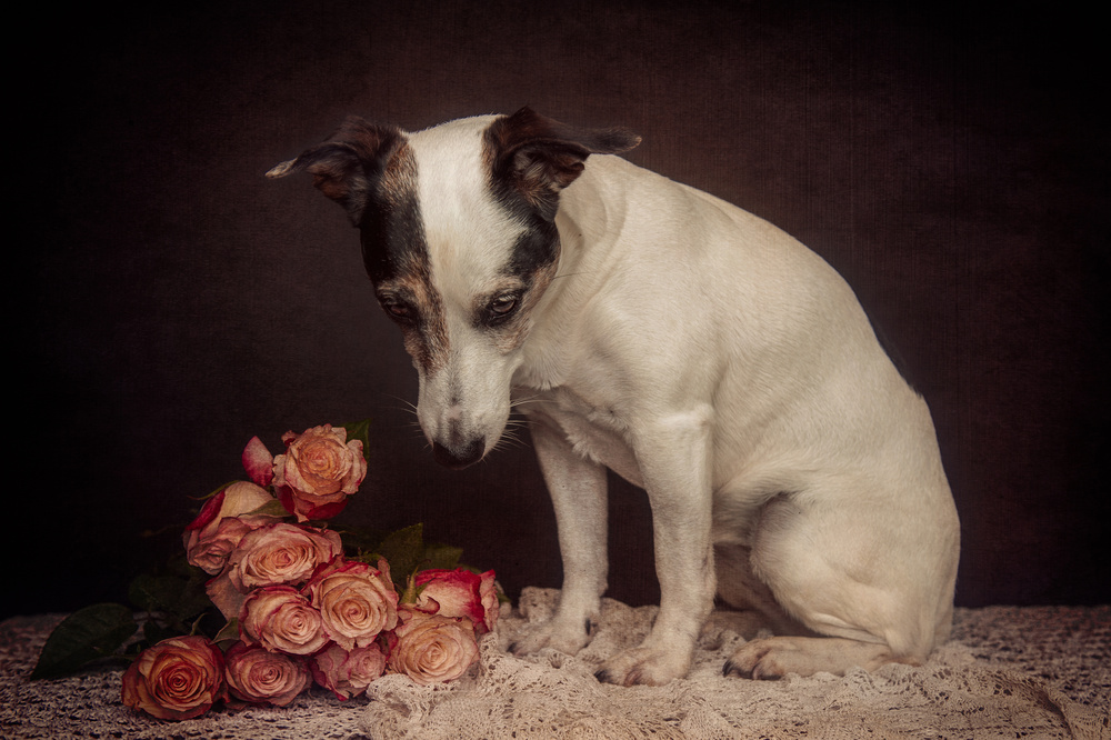 A piece of fine art art photography titled As Time Goes By by Heike Willers
