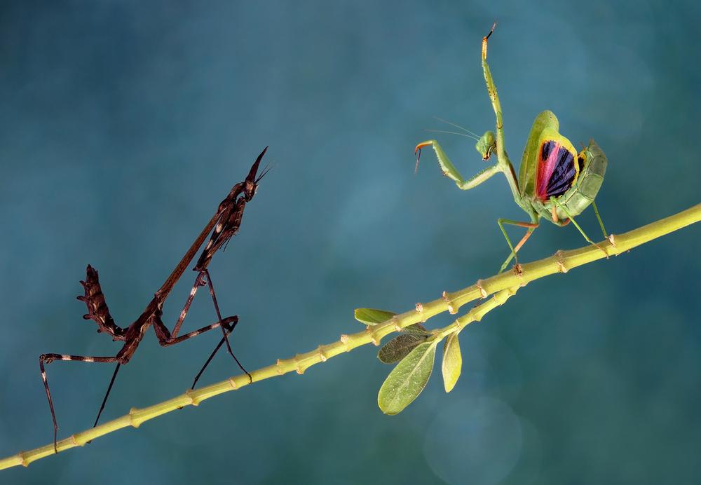 A piece of fine art art photography titled Encounter by ali akbar khandan