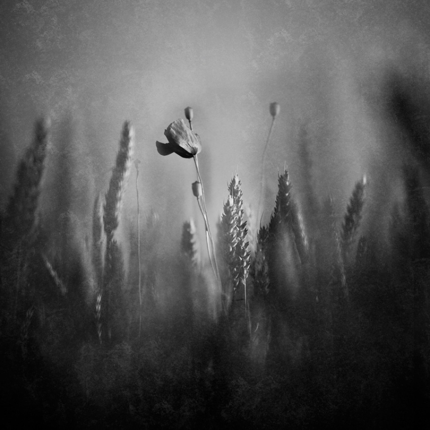 A piece of fine art art photography titled In My Dreams by Ivan Tonev