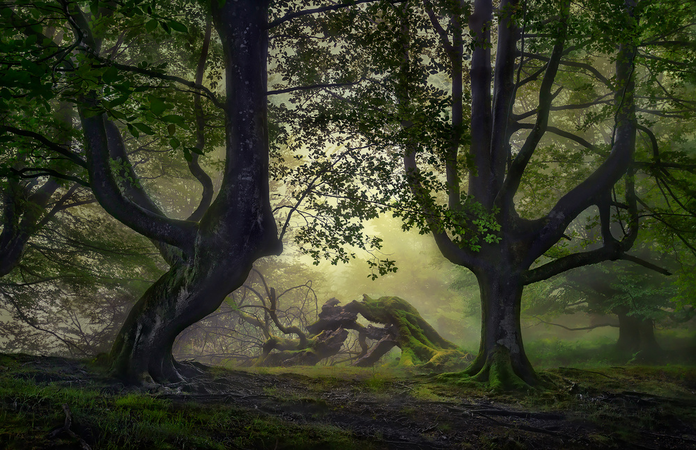 A piece of fine art art photography titled Guardians of the Forest by Fran Osuna