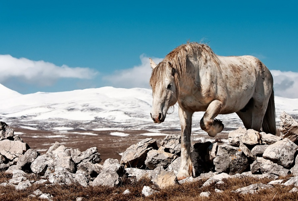 A piece of fine art art photography titled White Horse by Vedran Vidak