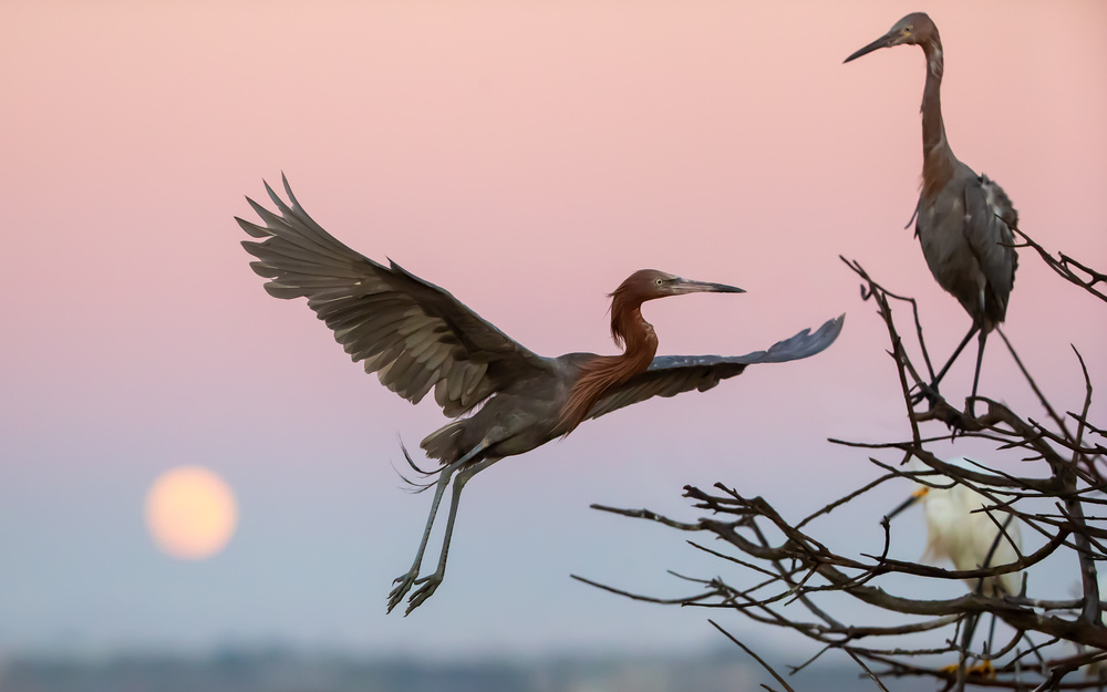 A piece of fine art art photography titled Flying In Pink Evening by Jack Zhang