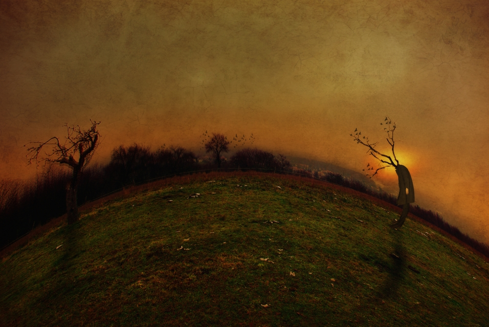 A piece of fine art art photography titled The Everdarkgreen by Kaveh Hosseini (Steppenwolf)