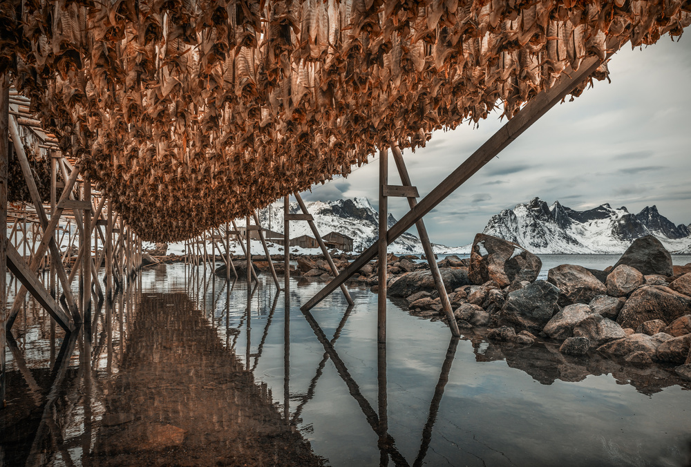 A piece of fine art art photography titled Stock Fish by Adrian Popan
