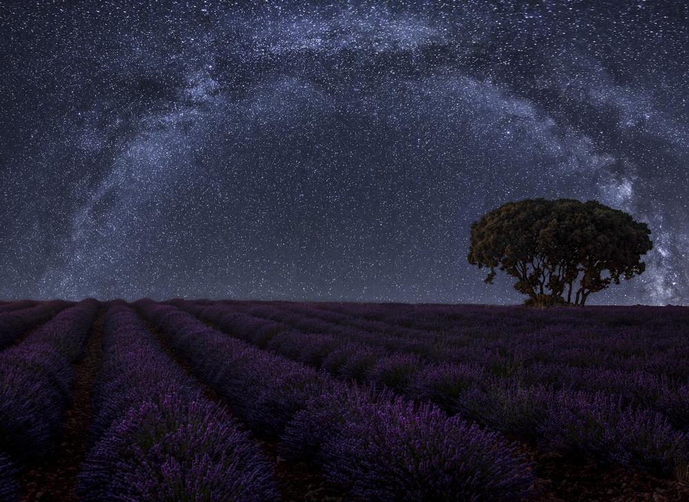 A piece of fine art art photography titled Lavender In Brihuega by Martin Zalba