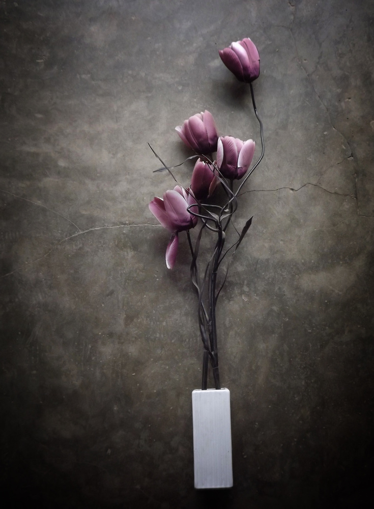 A piece of fine art art photography titled The Purple Tulip by kahar lagaa